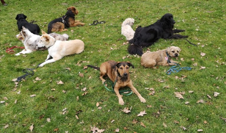Hundegruppe im Fit and Fun