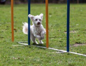 Hundesport in Duisburg Sport mit Hund